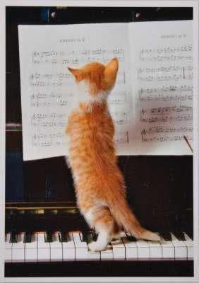 Postkarte Miezekatze am Klavier