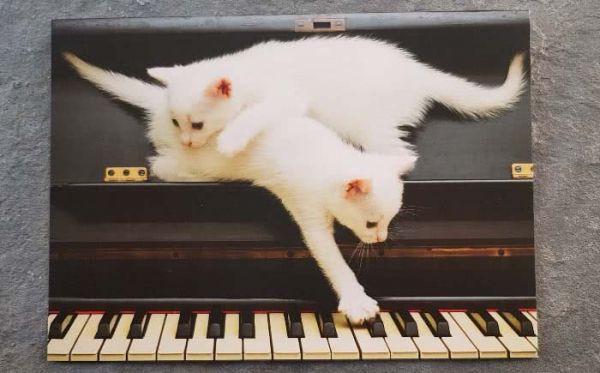 Postkarte weiße Katzen spielen am Klavier