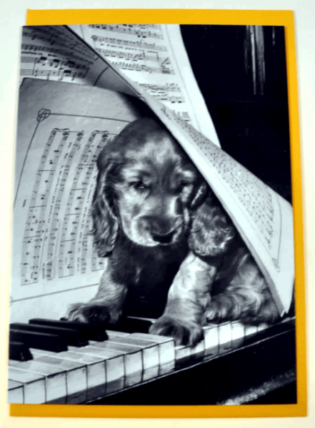 Klappkarte Le cabot au piano (Süßer Wuschelhund am Klavier)