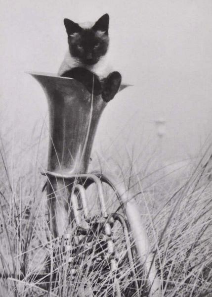 Postkarte Katze in der Tuba